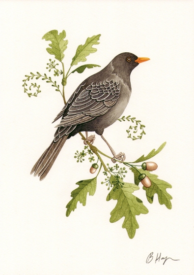 Michaela's Blackbird