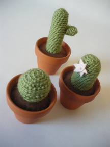 Woolly Cactii